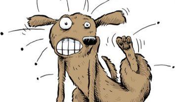 """Auf den Hund gekommen? Flohmittel darf im """"Shitstorm"""" auf Facebook trotz Werbeverbots verteidigt werden"""
