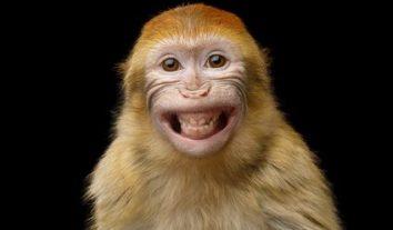 Affe kann nicht klagen: PETA verliert Streit um Dschungel-Selfie
