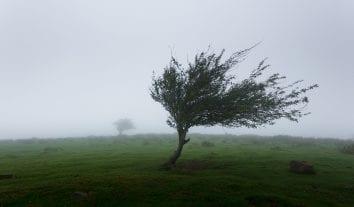 Zur Zulässigkeit der DWD Warnwetter-App – Wie wird der BGH entscheiden?